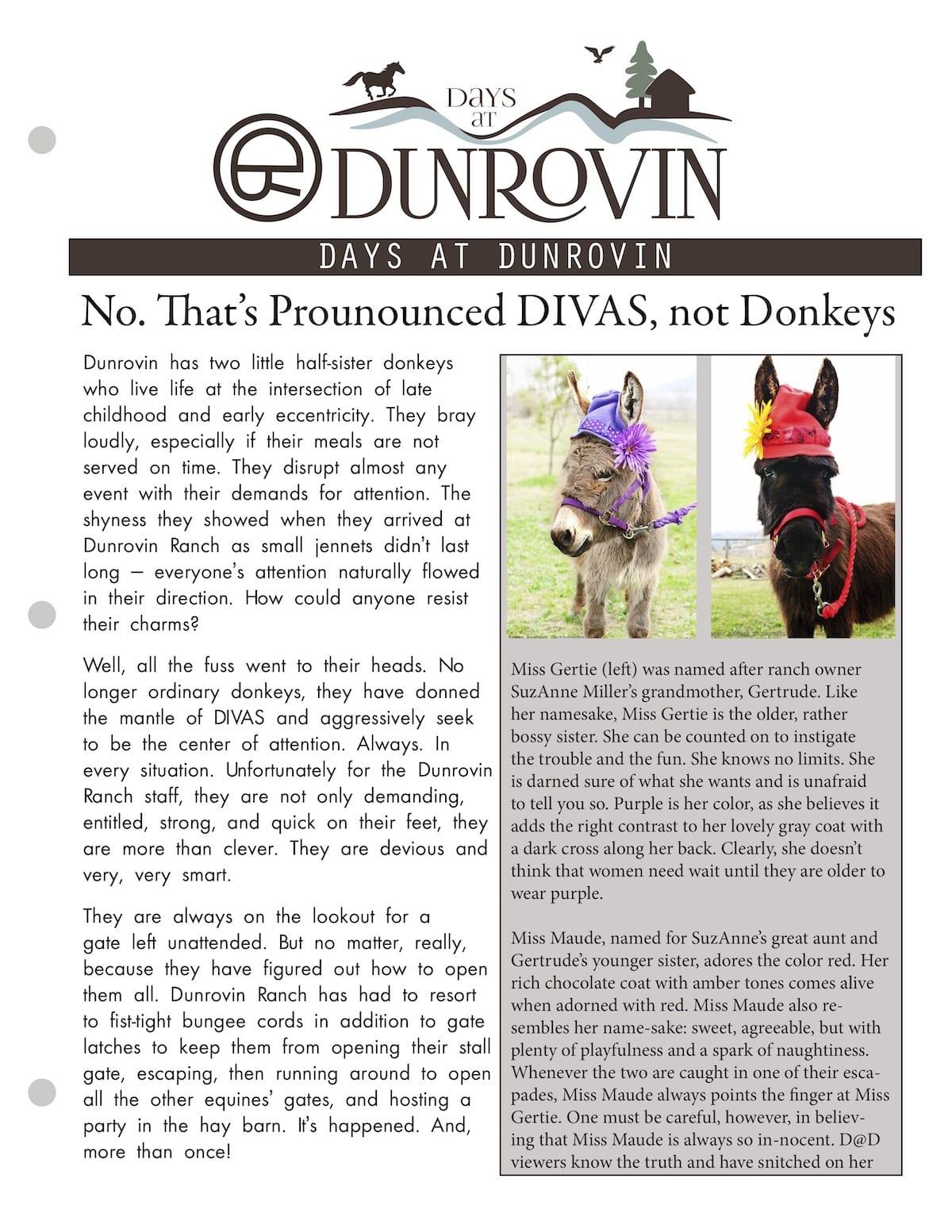 Donkey DIVAS Flyer Cover