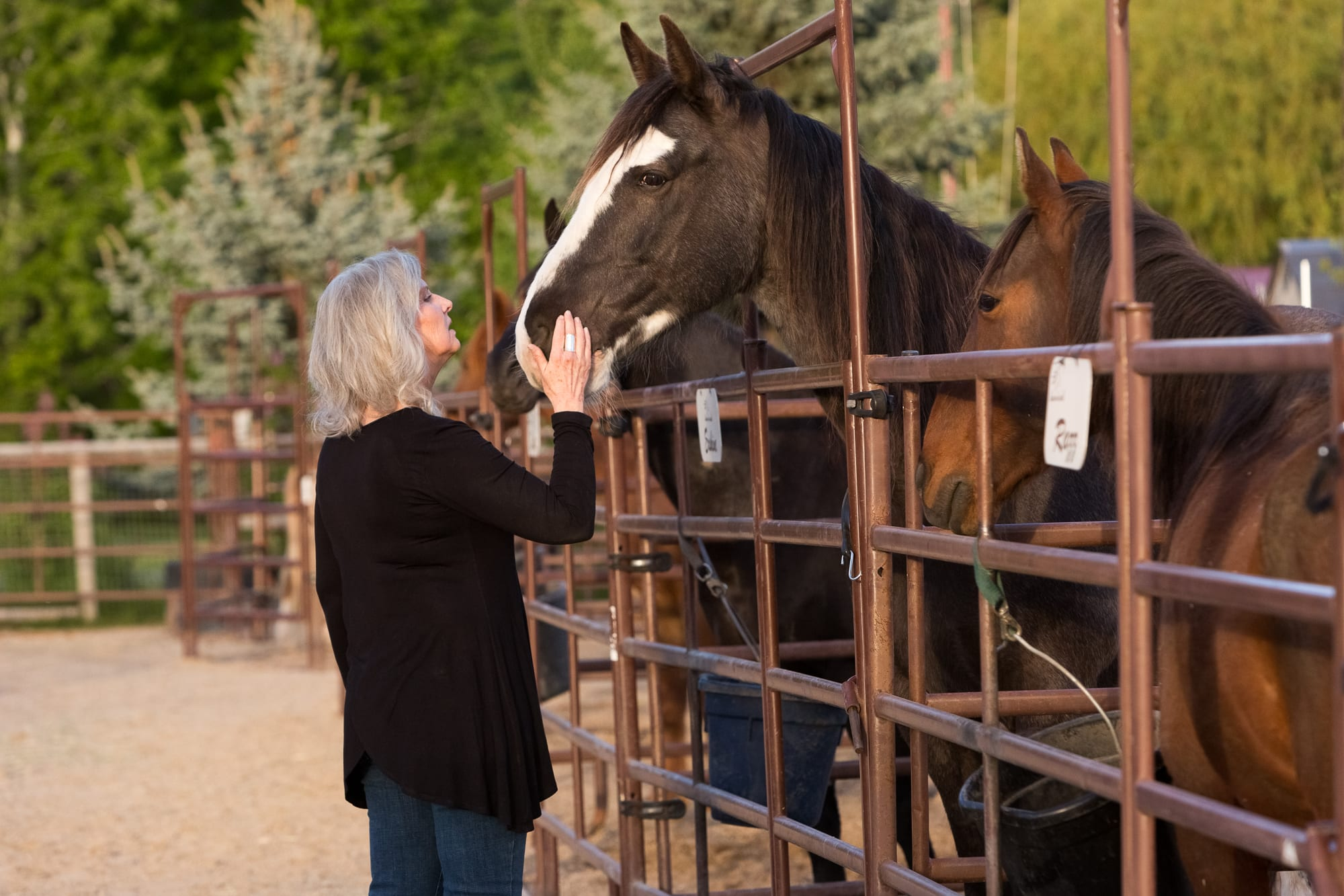 Dunrovin Ranch Destination Missoula Harlequin Contest By Pam Voth Photography A9A8155