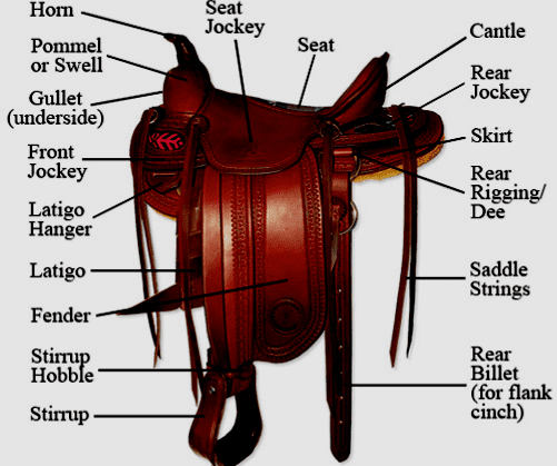 Saddle Fit