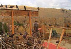Starlings At The Bridfeeder