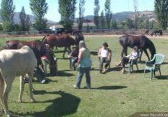 Dancing With Horses 09 10 2020 Vimeo Thumbnail